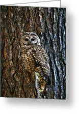 Mexican Spotted Owl Camouflaged Against Greeting Card