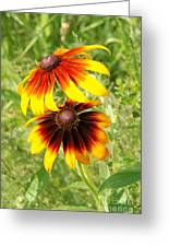 Mexican Sunflowers 2 Greeting Card