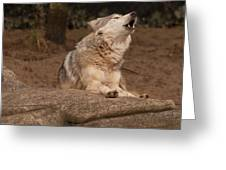 Mexican Wolf Howling Greeting Card