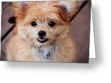 Mi-ki Puppy Greeting Card by Angie Tirado