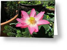Michele Bowl Lotus Greeting Card