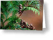 Michigan Cedar Cones Greeting Card