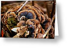 Michigan Fungus Greeting Card
