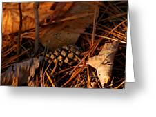 Michigan Golden Sunset Pine Cone Greeting Card