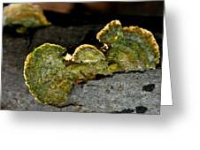 Michigan Jade Fungus Greeting Card