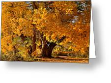 Mid-autumn Afternoon Greeting Card