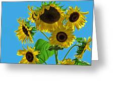Mid Summer Dreams Greeting Card