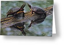 Midland Painted Turtles Greeting Card