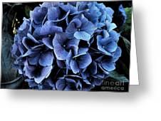 Midnight Hydrangea Greeting Card