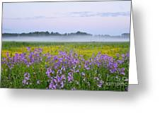 Midnight Light With Flowers Greeting Card by Conny Sjostrom