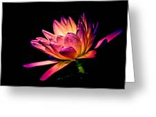 Midnight Lily Greeting Card by Julie Palencia