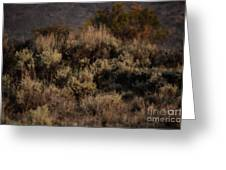 Midnight Sage Brush Greeting Card