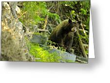 Midway - Backyard Bear Greeting Card
