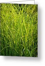 Midwest Prairie Grasses Greeting Card