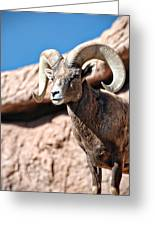 Mighty Big Horns You Have Greeting Card