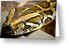 Mighty Python Greeting Card