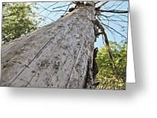Mighty Tree And The Bark Beetle Greeting Card