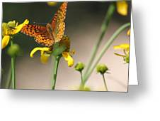 Migrating Butterfly Ser1 Greeting Card