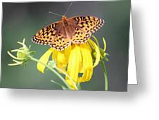 Migrating Butterfly Ser3 Greeting Card