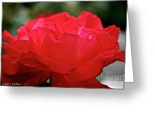 Mikado Tea Rose Greeting Card
