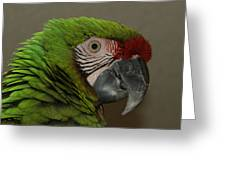 Military Macaw  Greeting Card