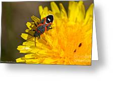 Milkweed Bug Greeting Card