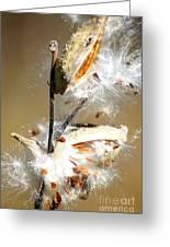 Milkweed  Explosion Greeting Card