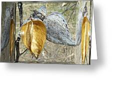 Milkweed Pods - Mirror Box Greeting Card