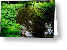 Mill Pond Stream In Green Greeting Card