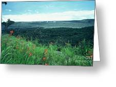 Million Dollar View Greeting Card by Alcina Morello
