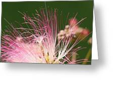 Mimosa And Worm Greeting Card