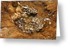 Mineral Stew Greeting Card