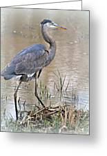 Mingo Great Blue Greeting Card
