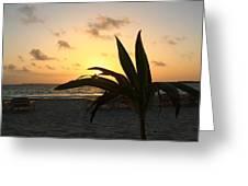 Mini Palm Hugging The Sun Greeting Card