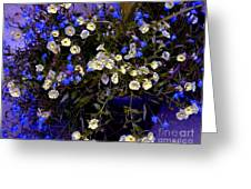 Mini Petunias Greeting Card