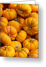 Mini Pumpkins Greeting Card