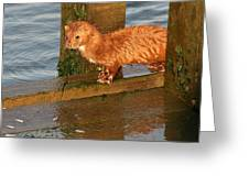 Mink Catching Fish Greeting Card