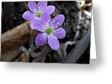 Minnesota Spring Wildflower Greeting Card