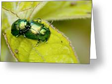 Mint Leaf Beetles Mating Greeting Card