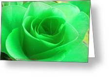 Mint Rose Greeting Card