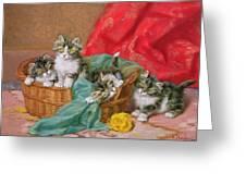 Mischievous Kittens Greeting Card