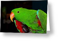 Mister Eclectus Parrot Greeting Card by Donna Parlow