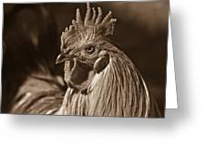 Mister Rooster From The Barnyard Greeting Card