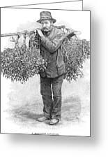Mistletoe Gatherer, 1894 Greeting Card