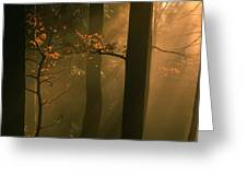 Misty Autumn Forest At Sunset Greeting Card