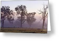 Misty Dawn Greeting Card