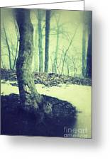 Misty Winter Woods Greeting Card
