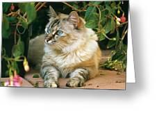 Mixed Breed Cat--mia Greeting Card