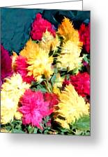 Mixed Celosias In Fall Colors Greeting Card