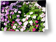 Mixed Impatiens In Dappled Shade Greeting Card